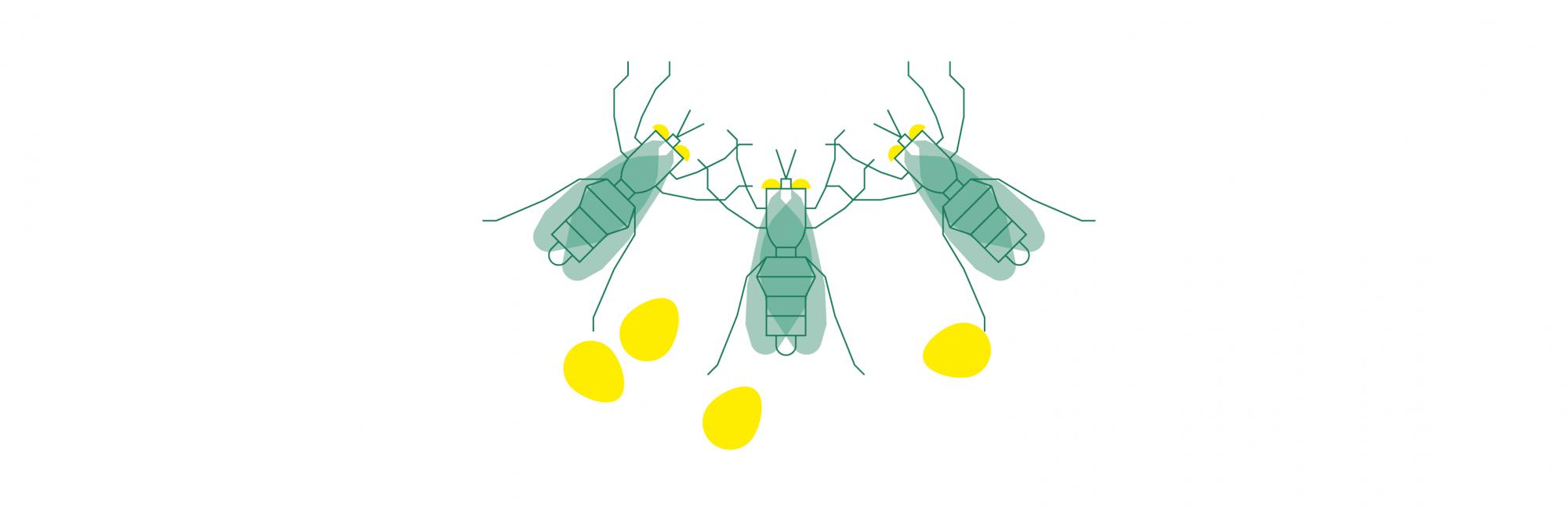 entomo-agroindustrial-moscas